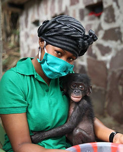 baby-bonobo-being-held-by-masked-caregiv