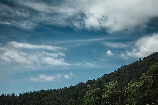 green-trees-on-a-hill-with-a-blue-cloude