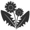 dandelion-weed-icon.png