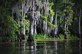 Life in the Bayou Cajun Swamp Tour
