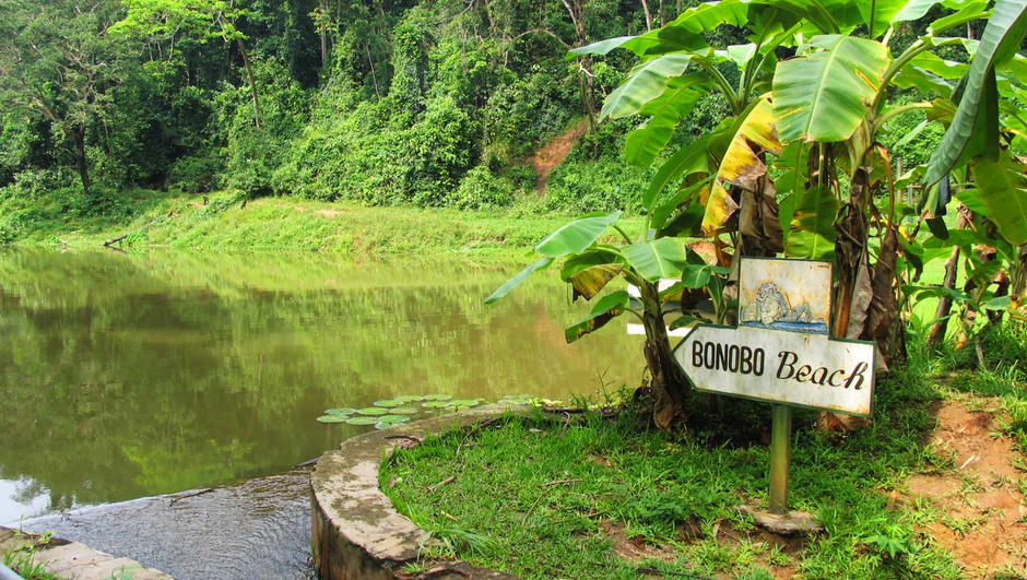 bonobo-beach-at-lola-ya-bonobo.jpg