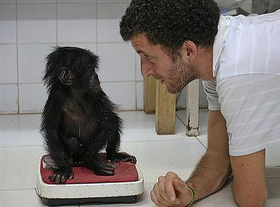 veterinarian-looking-at-baby-bonobo.jpg