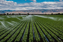 rows-of-crops-with-irrigation-sprinklers