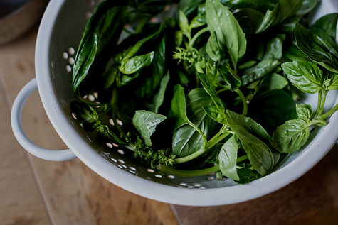 close-up-view-of-fresh-green-basil-in-co