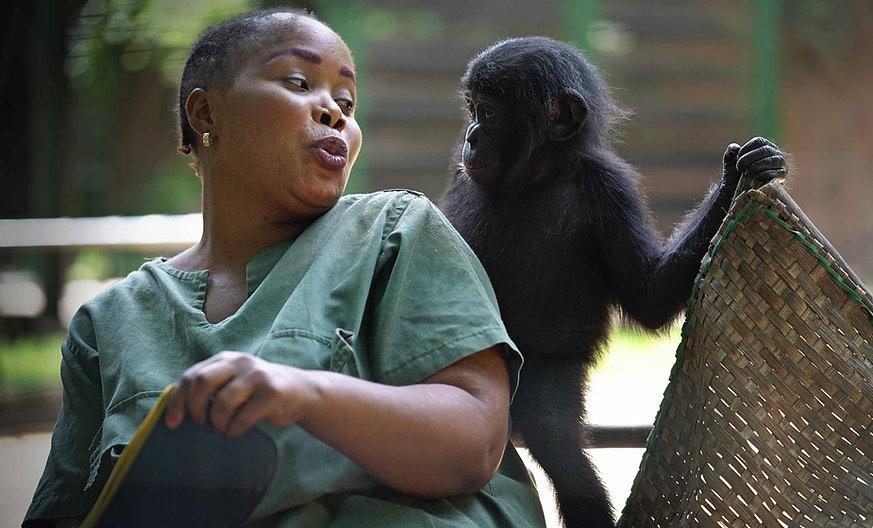 bonobo-surrogate-mom-playing-with-baby-b