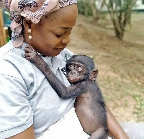 female-caregiver-with-baby-bonobo-laying