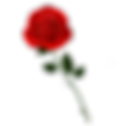 red rose left.png