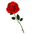 red rose left.png