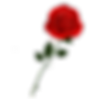 red rose right.png