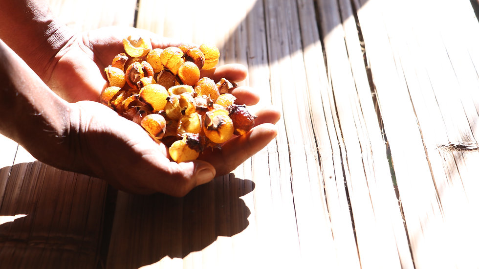 soapnuts Lunablu thailand