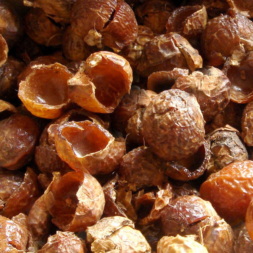 soapnuts or soapberry shells full of saponins