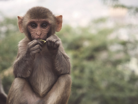 Are you caught in a monkey trap?