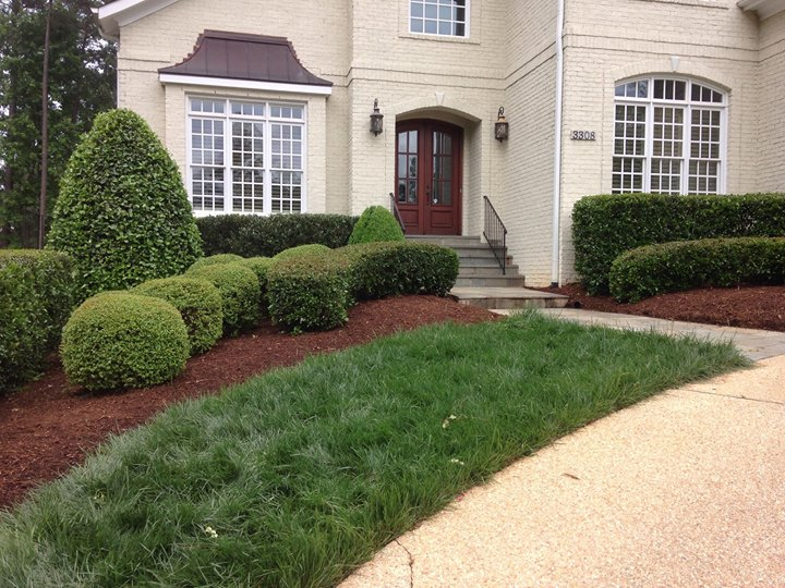 Exquisitely manicured shrubs & beautiful brown mulch by Carolinagardencompany
