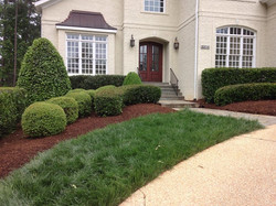 Exquisitely manicured shrubs & beautiful brown mulch by Carolinagardencompany