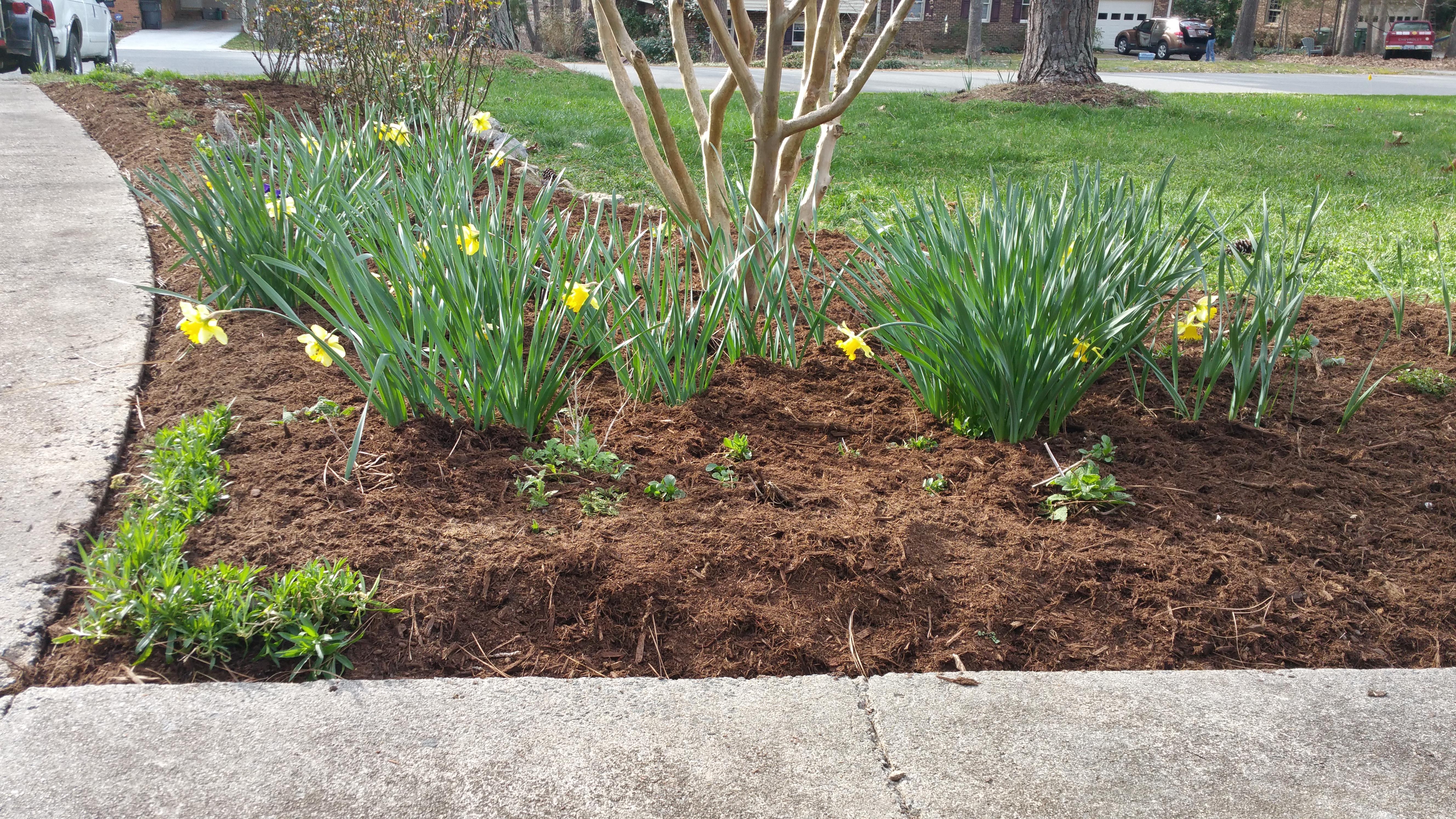 plus spring annuals