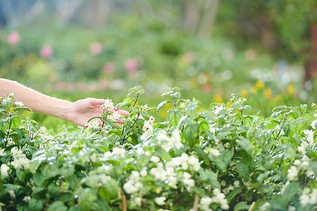 Farmer-touching-flowers-463038.jpg