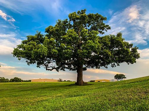 WWAC - Tree.JPEG