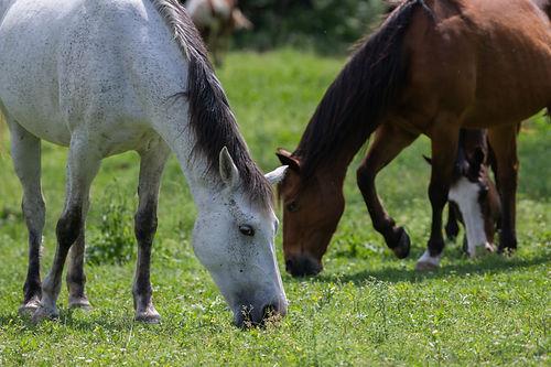 WWAC-Horses2.jpg