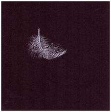 Drawing by Gourlay-Conyngham of a falling feather