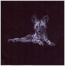 Drawing by Gourlay-Conyngham of endangered Wild Dog pup