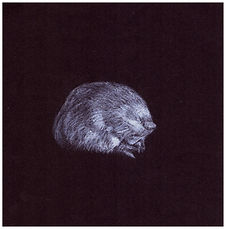 Drawing by Gourlay-Conyngham of endangered Golden Mole