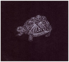 Drawing by Gourlay-Conyngham of endangered Geometric Tortoise