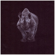 Drawing by Gourlay-Conyngham of endangered Black Rhino