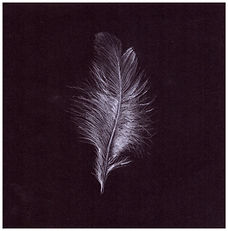 Drawing by Gourlay-Conyngham of a white feather