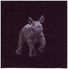 Drawing of endangered black rhino calf by Gourlay-Conyngham