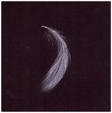 Drawingby Gourlay-Conyngham of a falling feather