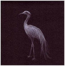 Drawing of endangered Blue Crane by Gourlay-Conyngham