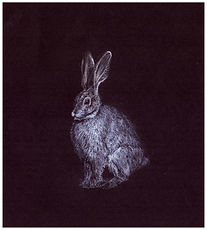 Drawing by Gourlay-Conyngham of endangered Riverine Rabbit