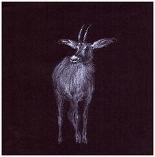 Drawing by Gourlay-Conynghamof endangered Roan Antelope