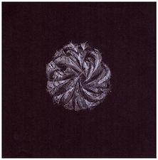 Drawing by Gourlay-Conyngham of endangered Magaliesberg Aloe