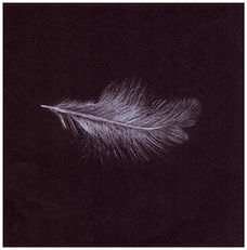 Drawing by Gourlay-Conyngham of a falling white feather