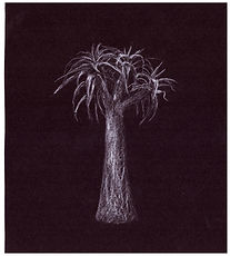 Drawing b Gourlay-Conyngham of endangered Giant Quiver tree