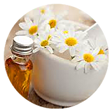 German-Chamomile-Essential-Oil.png