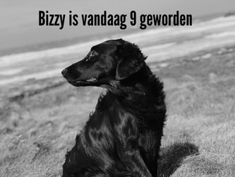 Bizzy is 9 geworden