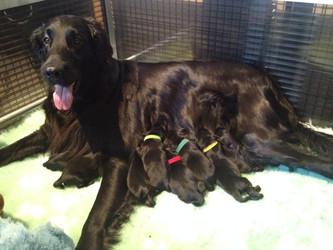 Bizzy bevallen van 11 pups