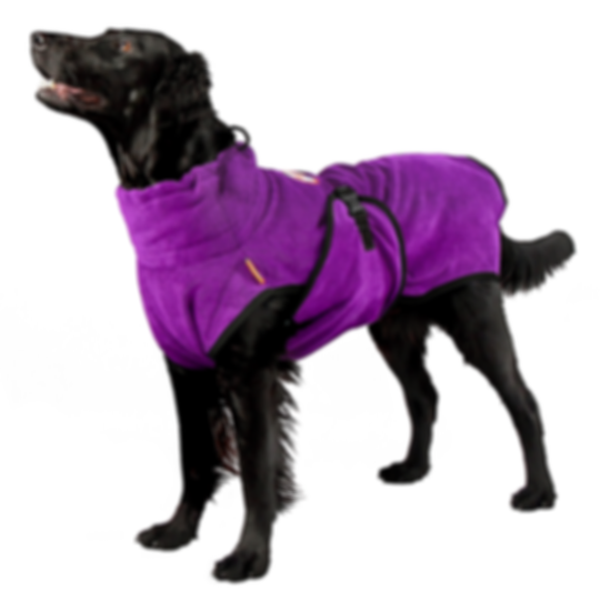Chill Coat Dog Isolated Purple.png
