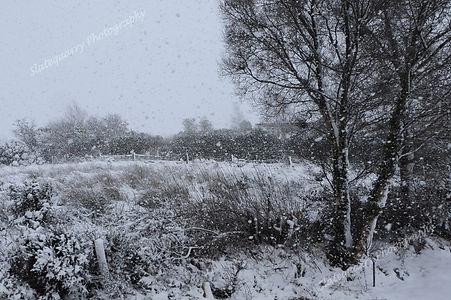 Winter Snow.jpg