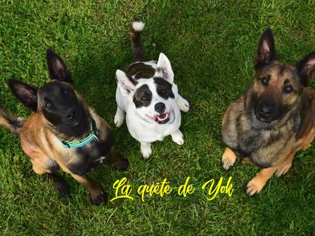 #la_quete_de_yok