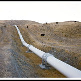 SAF (Pipes & Cows), 2003/ 2010
