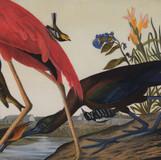 Advancements in Ornithology, 2015