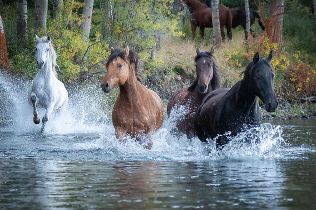 Splashing Toward Home by Marcia Mundrick
