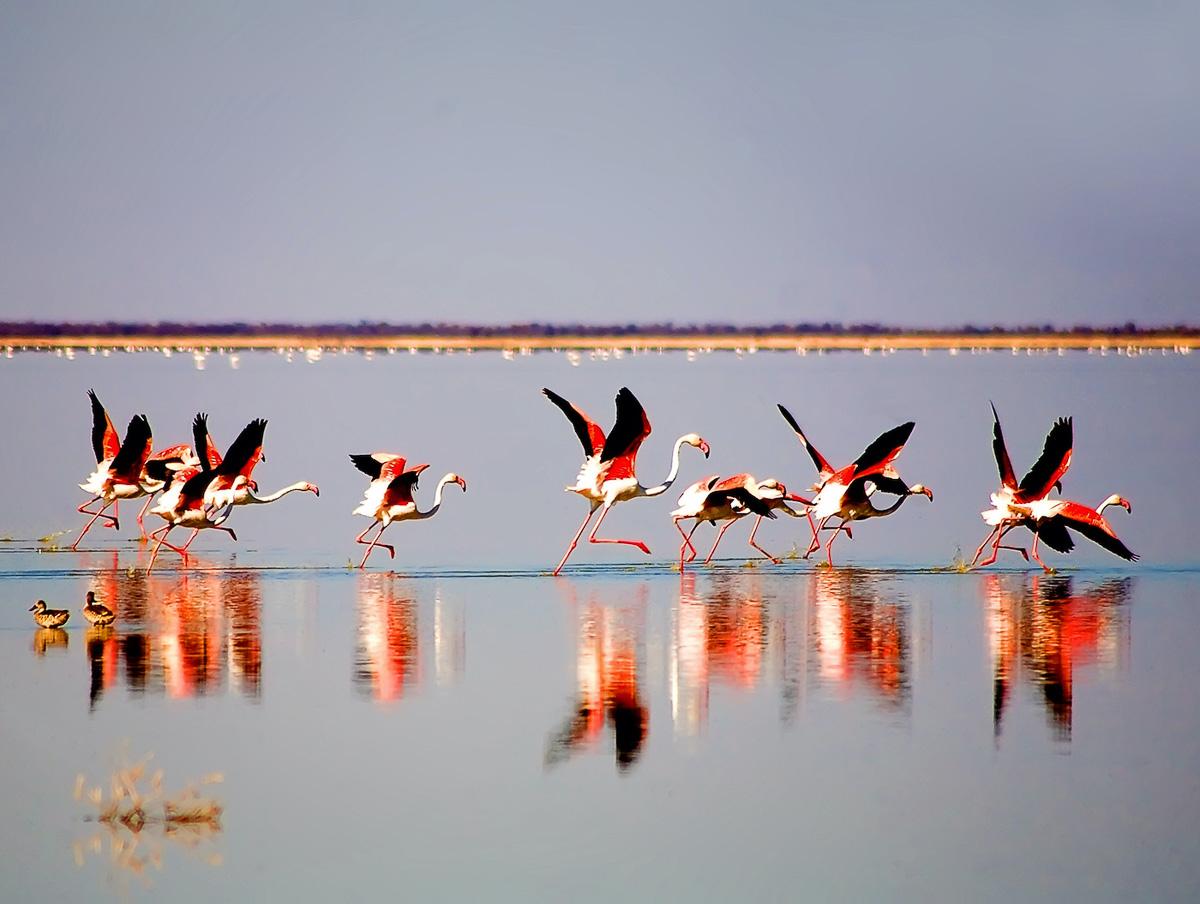 Flamingos Escape by Sanford Morris