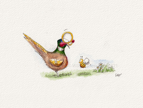 Cute and humorous pheasant looking at a bee in the garden.