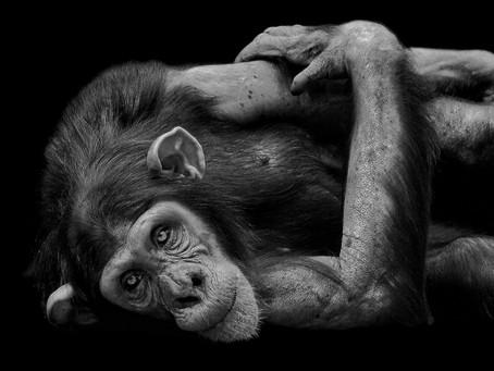 Wat kunnen we leren van dieren?
