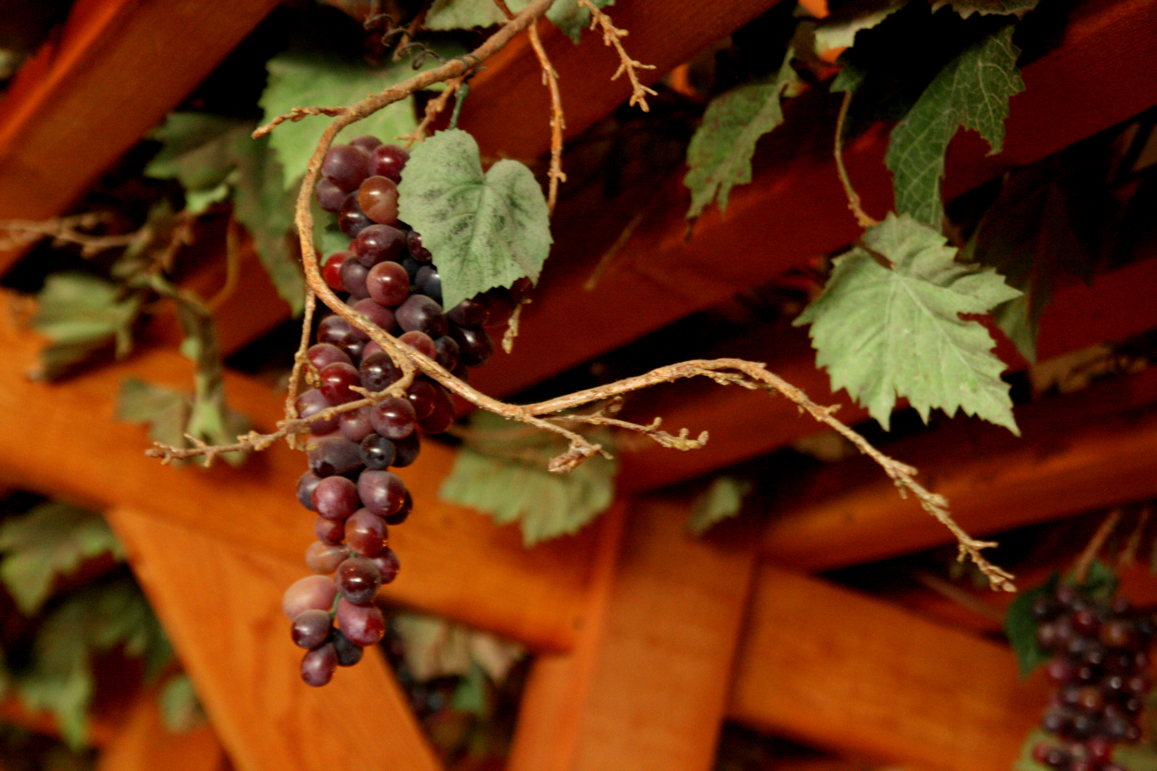 Fronimo's grape vine trellis