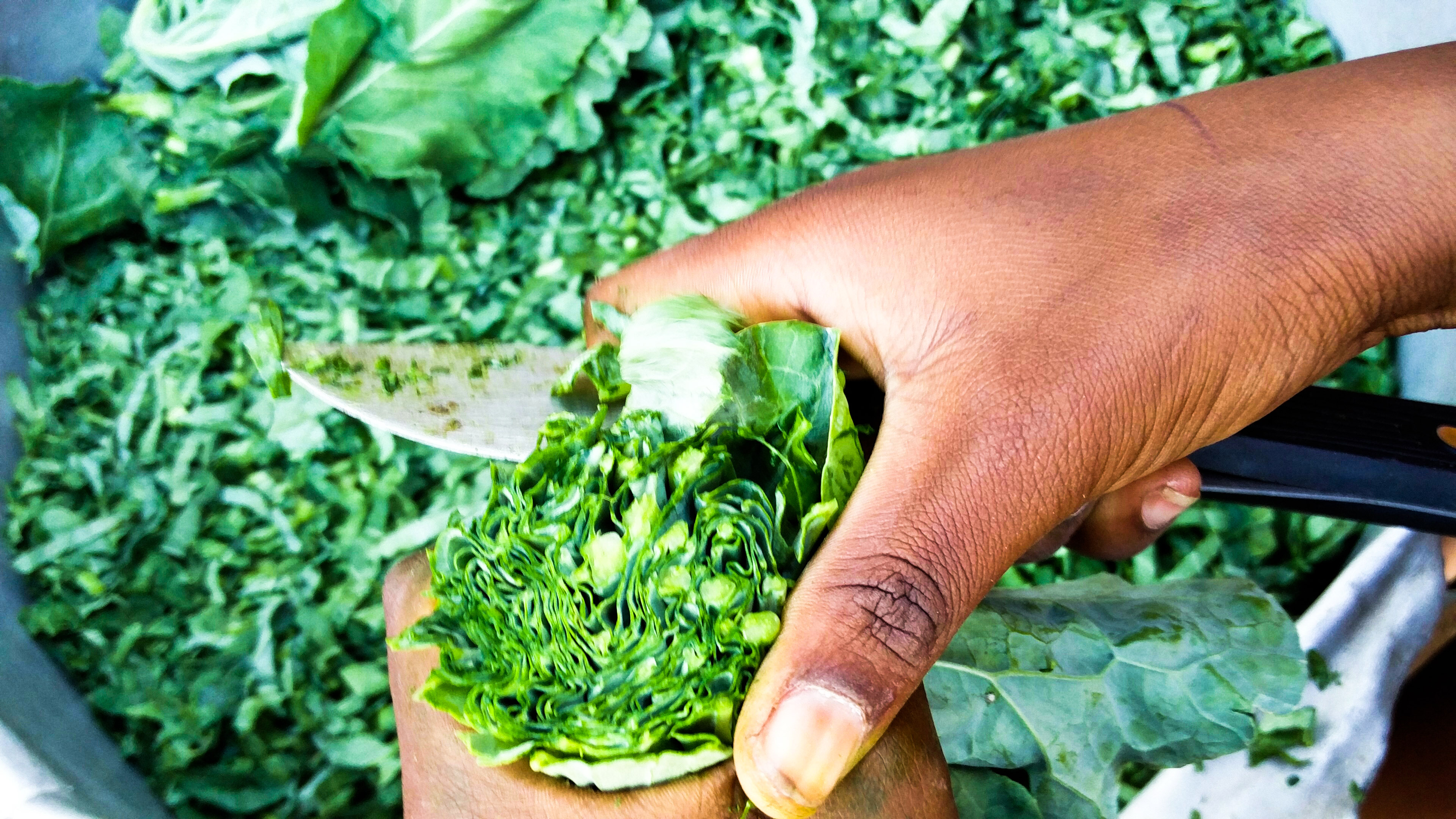 Preparing kale for the cooking pot